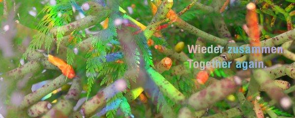 Wieder zusammen. | Together Again.